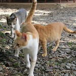 "Cat Safari <a style=""margin-left:10px; font-size:0.8em;"" href=""http://www.flickr.com/photos/14315427@N00/6591780681/"" target=""_blank"">@flickr</a>"