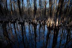 Francis Beidler Forest in Winter (Gentle King) Tags: forest south charleston swamp carolina cypress tupelo beidler fourholesswamp goodsonlake