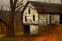 Left Watching and Waiting - in explore, front page (SunnyDazzled) Tags: windows winter cold building history abandoned dutch barn rural vines pennsylvania farm empty branches garage surreal bank historic haunted spooky baretrees delawarewatergap pennsylvaniadutch windowpanes nyce bankbarn eshback