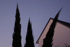 sunset4 (lux fecit) Tags: pink sunset bent cypresses nantes