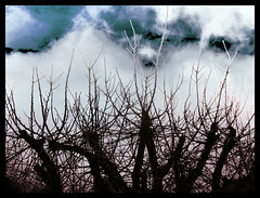 Spooky sky (VillaRhapsody) Tags: autumn sky tree colors clouds manipulated photoshopped branches bold challengeyouwinner mygearandme