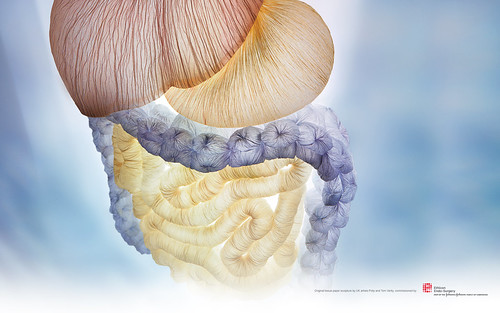 essay small intestine The small intestine is the only part of the gastrointestinal tract that is essential for life it serves a neuroendocrine function, a digestive function.