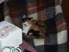 DSCF7572 (elfboi) Tags: cat katze lieschen