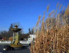 Rackham Fountain (timmerschester) Tags: blue sky fountain michigan january grasses royaloak detroitzoo