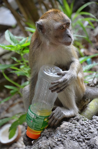 Monkey Business 1 ©  Still ePsiLoN