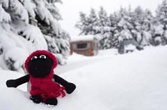 70/365 // Timmy spielt im Schnee (kly420) Tags: project geotagged one object days das 365 timmy kleiner campingplatz altenberg schfchen galgenteich geo:lon=13745227 geo:lat=50765837