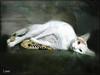 Luisa Top Model (musymas) Tags: cat gato luisa contemporaryartsociety fantasticnature kittysuperstar kissablekats bestofcats velvetpaws kittyschoice catmoments alittlebeauty musymas magicunicornverybest coppercloudsilvernsun imageourtime