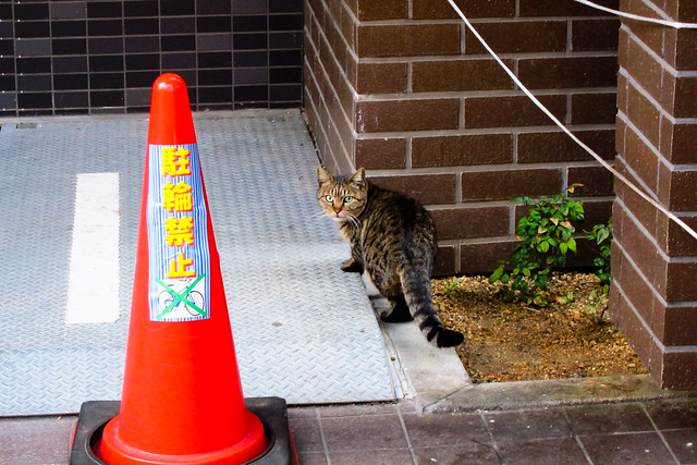 Today's Cat@2012-01-11