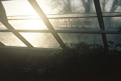 (ole thomas) Tags: light sun house film window nature oslo greenhouse flare botanicgarden tyen contaxg1 160asa kodakportapro