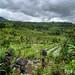 Jatiluwih: Rice Terraces