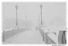 Snow (Sheldon Emberly) Tags: winter snow footbridge pictureperfect assiniboinepark supershot theenchantedcarousel nikond3000