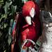I bei pappagalli dell'Hostal España (3)
