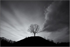 Light vs Darkness (Patrick Giardina) Tags: winter light sunset wild sky blackandwhite bw italy black tree nature lines clouds canon countryside moving italia tramonto nuvole january natura hills campagna cielo campo 5d desaturated albero inverno luce collina gennaio 2012 friuli markii desaturato selvaggio