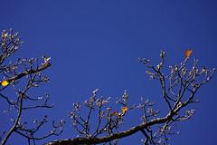 recinto per volo (duegnazio) Tags: canon italia blu cielo ramo azzurro 2012 lazio 40d postafibreno somethingblueinmylife duegnazio