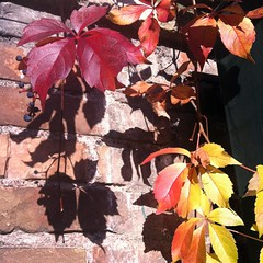 piece of fall (SS) Tags: city november blue autumn light shadow red italy orange brown white house black roma green fall nature weather yellow wall composition contrast square beige focus colorful glow shadows view angle bokeh pov walk branches details burning crop villa bouquet bianco nero lazio iphone natureselegantshots