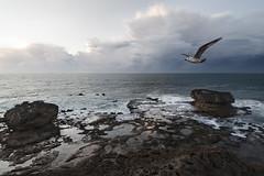 (hireen) Tags: canon atardecer mar seagull morocco maroc marruecos gaviota essaouira rocas atlántico océano eos450d hireen