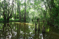 here's to now (Nola Nate) Tags: trees reflection green nature water landscape louisiana swamp cypress knees tupelo honeyislandswamp ibeauty pearlriverwma