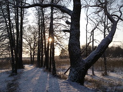 Winter on the lake - 18 (AndreaGerak) Tags: winter snow sweden sunny sverige vikingland