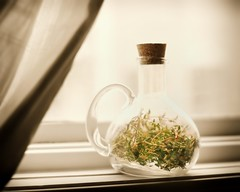 Putting Time (Thyme)  in a Bottle (-liyen-) Tags: stilllife window bottle curtain explore figureofspeech windowsill herb thyme d300 timeinabottle interestingness55 activeassignmentweekly bestofweek1 bestofweek2 bestofweek3 bestofweek4 bestofweek5 challengeyouwinner thymeinabottle nikond300