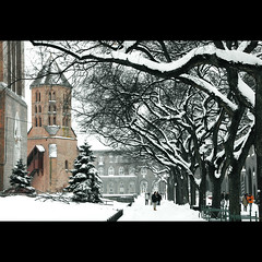 (Balzs Papdi) Tags: winter snow tree tower hungary torony szeged fa magyarorszg h tl memlk dmtr