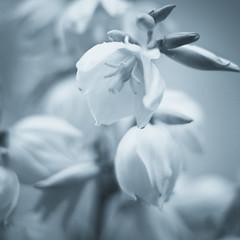 Pure #4 (Sebastian (sibbiblue)) Tags: blackandwhite bw plants nature closeup landscape natur pure 50mmafs nikond7000