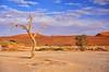 """Dunes 02 (lencomb) Tags: tree desert deadtree namibia sossusvlei desert"""" dunes"""" """"huge """"namib """"enroot sossusvlei"""""""