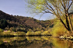 Mosel (Colognid) Tags: la fluss mosel weinberg moselle