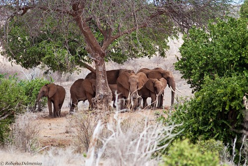 """Tsavo Est (52 di 265) • <a style=""""font-size:0.8em;"""" href=""""http://www.flickr.com/photos/121308622@N02/13991574881/"""" target=""""_blank"""">View on Flickr</a>"""