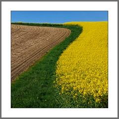 Linien und Farben (Lines and colors) (alfred.hausberger) Tags: felder fields raps farben frhling niederbayern formen linien rottal updatecollection