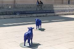 photoset: MuseumsQuartier Vorplatz: Blaue Friedensherde (6.5. & 7.5.2016)