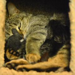 20160415_GorgeousKittens_2629_4x4 (Creativeleigh Shot...by LeighAnneD) Tags: cats cat feline outdoor kittens neighborhood litter felines
