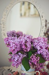From my not garden (prettyredglasses.com) Tags: flowers wild flores nature bluebells cat spring lilacs gingercat lilas purplelilacs flowersphotography fotografiaflores lilasmoradas