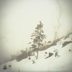 (Karo Krmer) Tags: schnee trees winter mountain snow berg fog analog 35mm bavaria skiing nebel dust bume hang arber bayerischerwald rollei35t kleinbild