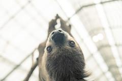 sloth (yako ma) Tags: digital nikon df nikondf
