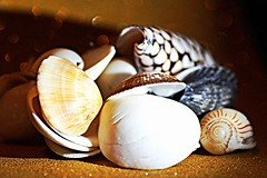 Macro Mondays - When I was a Child (sylviamay1963) Tags: sea shells seashells sand salt beaches tamron90mmmacro oceanandearth sonya58 macromondayswheniwasachild