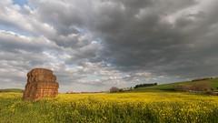 After the rain (montep) Tags: sky italy flower primavera field clouds landscape italia tramonto nuvole hill giallo cielo terra colori paesaggio collina sera sprig balle campi