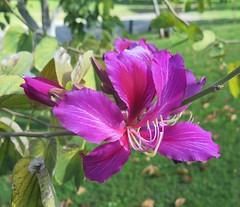 May 22, 2016 (27) (gaymay) Tags: california gay flower love fun purple desert riverside games fairmountpark riversidecounty rainbowgame bestbuyolympics