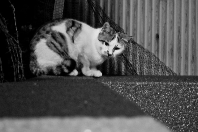 Today's Cat@2011-11-24