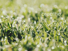 breathe. (LauraBowman) Tags: green nature water grass writing bokeh dew breathe