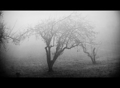 No one dared Disturb the Sound of Silence - [explore 29/11/2011 #480] (lucia bianchi) Tags: tree fog explore 480 nebbia albero foggyday thesoundofsilence 29112011 fotografatadallafinestra