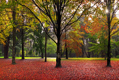 Forest Of Autumn Colour (rhyspope) Tags: road street autumn panorama house mountain holiday color colour tree fall wet rain fog corner canon fence garden season gate track mt bright pano cottage australia bluemountains trail hedge aussie canopy mountwilson 500d rhyspope