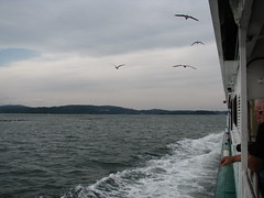 Matsushima  () Tags: seagulls japan landscape  paysage matsushima japon mouette