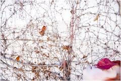 el fuego fro (esther kiras) Tags: christmas woman plants white selfportrait cold color fall blanco nature leaves canon hojas fire navidad plantas december roots spot invierno fuego reds autorretrato
