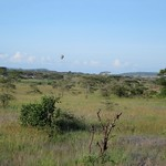 "Balloon Safari <a style=""margin-left:10px; font-size:0.8em;"" href=""http://www.flickr.com/photos/14315427@N00/6592102405/"" target=""_blank"">@flickr</a>"