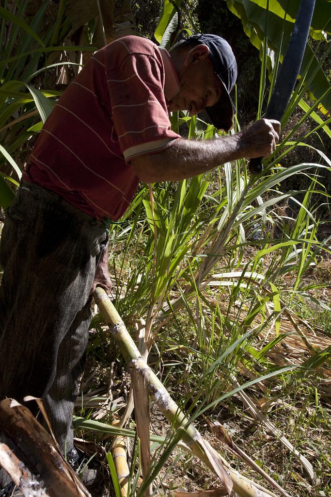 Plantation de Luis Santos GARCIA