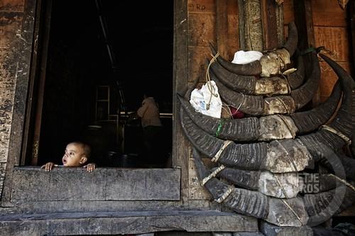 baby in a doorstep-Sumba_201113459