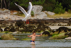 Terror en la Playa (www.justigarcia.com) Tags: real mar playa ave terror perspectiva nio gaviota ataque panico forzada