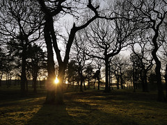 TREEHENGE (kenny barker) Tags: trees winter sunset history nature landscape lumix scotland o falkirk bonnybridge delujo panasonicgf1 kennybarker