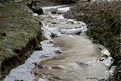 winter stream (Henry der Mops) Tags: schnee winter snow field grass creek germany deutschland frozen stream seasons jahreszeiten lawn meadow wiese bach icicle brook icy grassland eis gree watercourse gefroren krebsbach