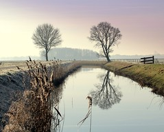 The Sentinel (Ger Bosma) Tags: winter reflection tree boom groningen gettyimages winterlandscape reflectie winterlandschap ringexcellence img30653a